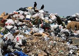 Общественная палата изучила областной мусор