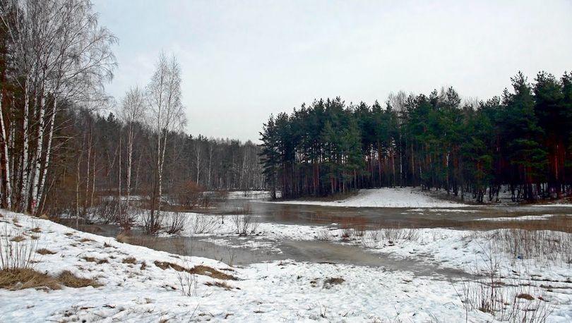 Ржевский лесопарк предлагают защитить от застройки