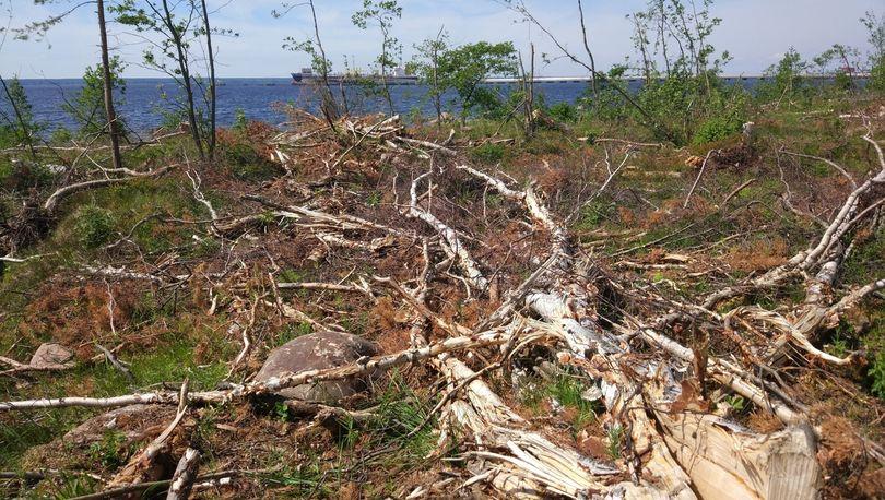 уничтожение природы