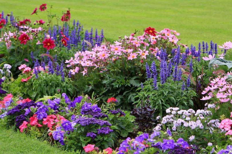 Сады непрерывного цветения