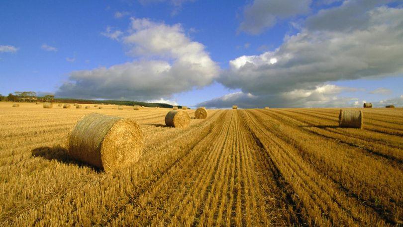 Перераспределены субсидии на развитие сельских территорий