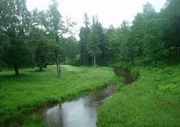 Лес Ораниенбаума может стать особо охраняемой природной территорией