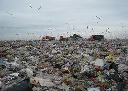 В Подпорожье могут построить мусорный полигон