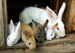 В Ленобласти построят кролиководческий комплекс за 2,5 млрд рублей