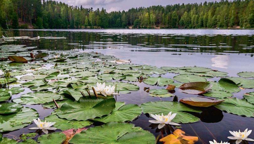 8 территорий в Петербурге могут получить статус особо охраняемых