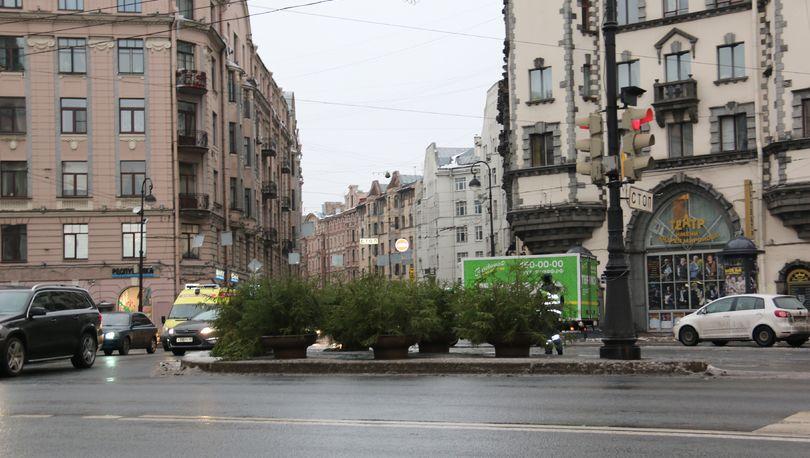 Улицы Петербурга украсят живыми елями