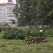 Суд признал незаконным разрешение на застройку Муринского парка