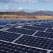 Источники солнечной энергии в России заинтересовали владельца IKEA