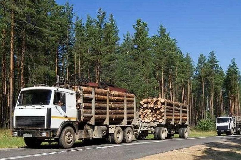 Лесовозы