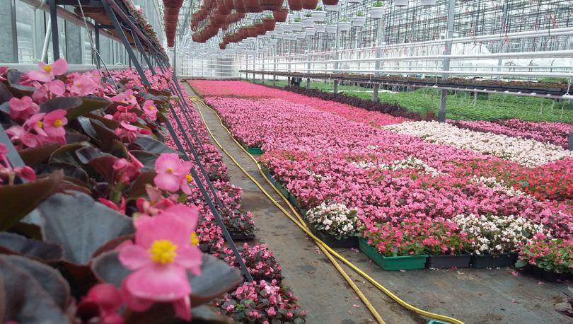 Цветы к субботнику