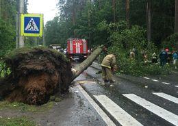Ветер повалил в Петербурге 35 деревьев