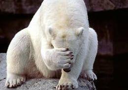 Смольный не определил новое место для зоопарка
