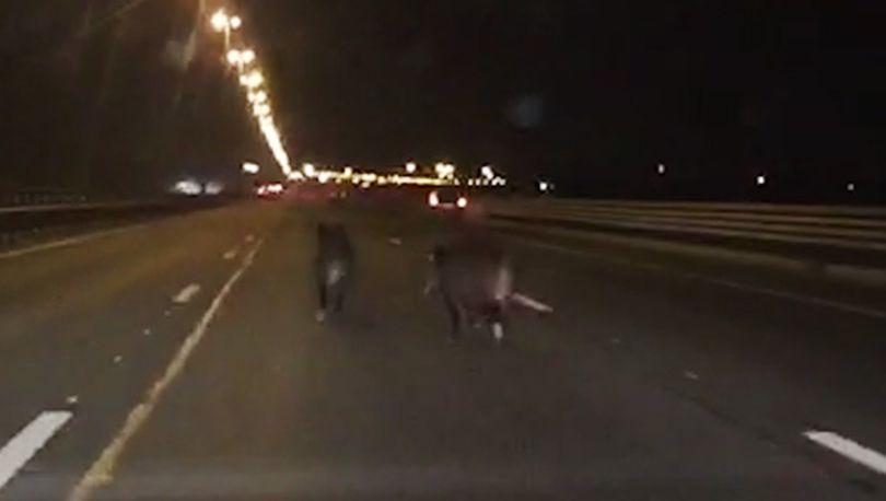 В Петербурге установят дорожные знаки «Дикие животные»