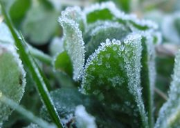В Ленобласти ожидаются заморозки