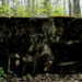 Парк усадьбы Колычева – Толстых уточнил свой статус