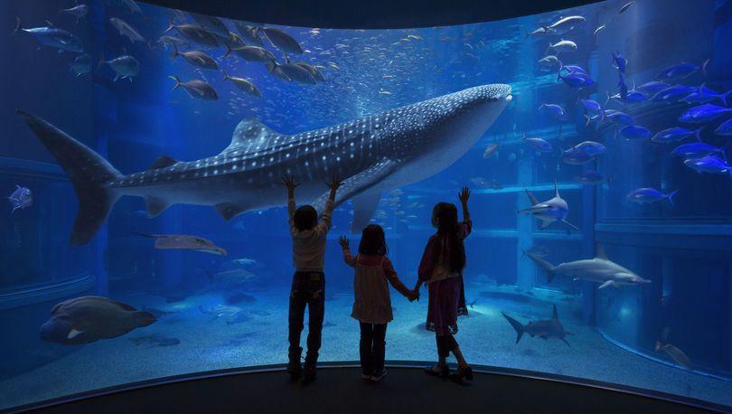 Инвестор океанариума в Купчино получит статус стратегического