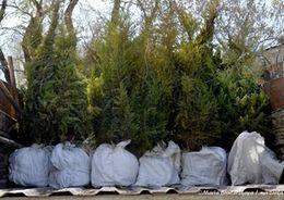 В Петербурге в 2015 году высажено 18 тыс. деревьев