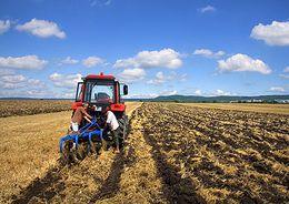 В Ленобласти вместо лесов будут застраивать неиспользуемые сельхозугодья