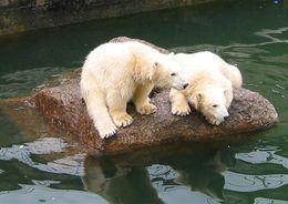 На перевод земель из федеральной собственности для нового зоопарка на Ржевке нужно пять месяцев