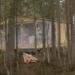 В Ленобласти появится первый в России сафари лодж