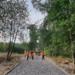 Тосненский парк преображается