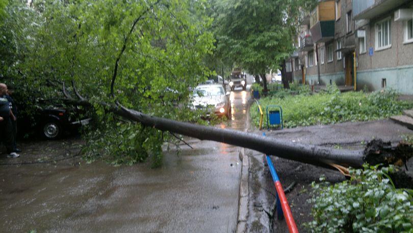 Штормовой ветер в Петербурге повалил деревья