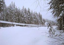В Карелии несколько ЛЭП отключились из-за налипания снега