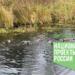 Чистые водоемы для Гатчины