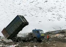За первые дни сентября с улиц Петербурга вывезено более 440 тонн мусора