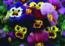 Петербург украсят миллионы цветов