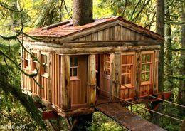 В Московской области построят отель на деревьях