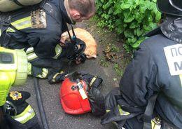 Из горящей квартиры на Обручевых спасли кота