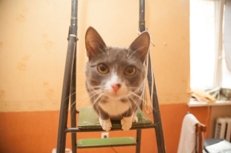 кот на стремянке