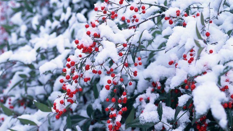 В Петербурге вновь ожидают снег с дождем