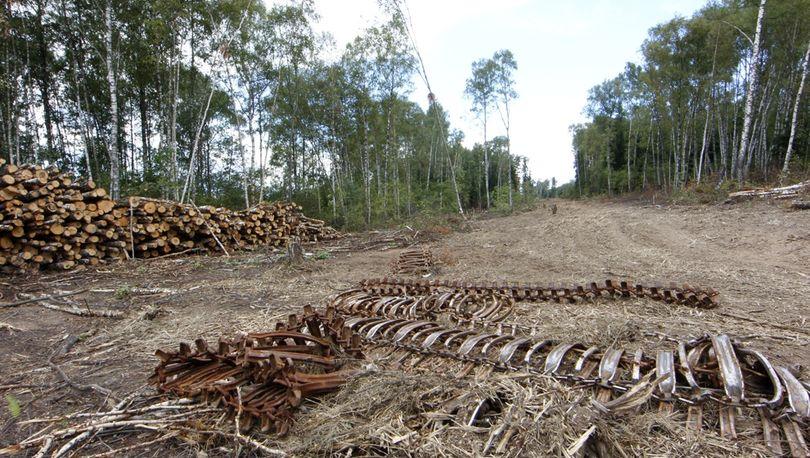 За рубку леса «Ленэнерго» заплатит 332 млн рублей