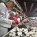 Александр Дрозденко открыл новый комплекс по производству грибов во Всеволожском районе