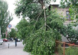 За выходные в Петербурге упало более 200 деревьев