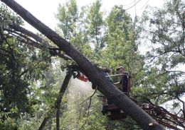 За сутки шквалистый ветер в Петербурге повалил 83 дерева