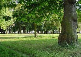 В Петербурге появится еще один парк