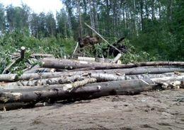Заготовку древесины в Ленобласти упростят