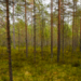 Более 120 свалок ликвидировано в лесах Ленобласти