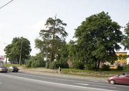 Депутаты просят Полтавченко не допустить строительство высотки рядом с парком Сосновка