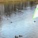 Ленинградская область чистит реки и озёра