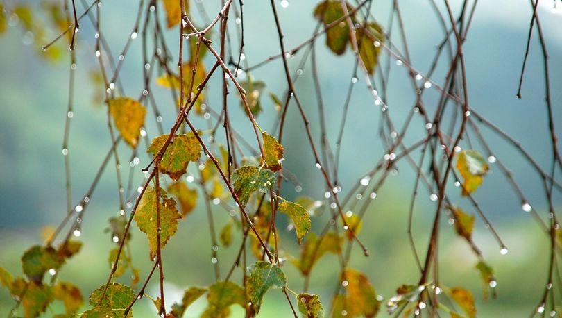 Непогода в Петербурге задержится до воскресенья