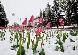 В Петербурге  ожидается снег