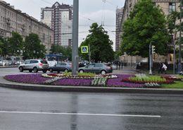 Петербург украсили к ПМЭФ 600 тыс. цветами