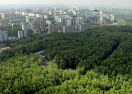 Вокруг крупных городов появятся зеленые зоны