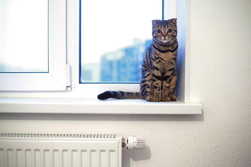котик и окно